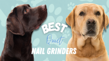 Best Quiet Nail Grinders in 2021