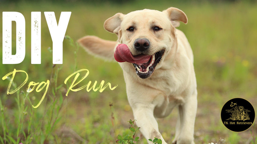 Tips for Building a Dog Run