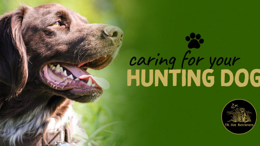 Caring for Your Hunting Dog