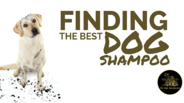 Finding the Best Dog Shampoo