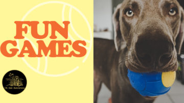 Fun Games to Play with your Lab