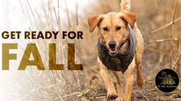 Help Your Hunting Dog Get Ready for Fall.