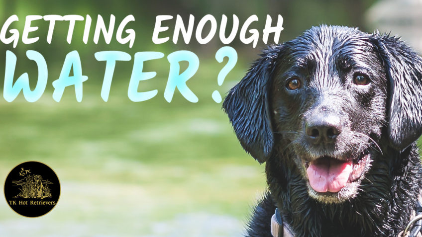 Giving Your Dog Enough Water