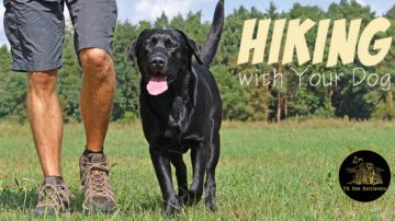 Hiking with your dog.