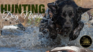 Popular hunting dog names for 2018.