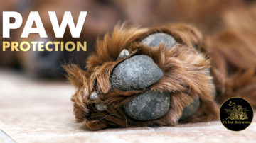 Hunting Dog Paw Protection