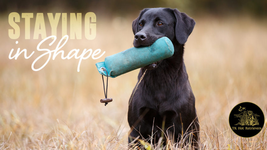 Keeping your dog in shape.