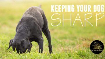 Keeping your dog sharp.