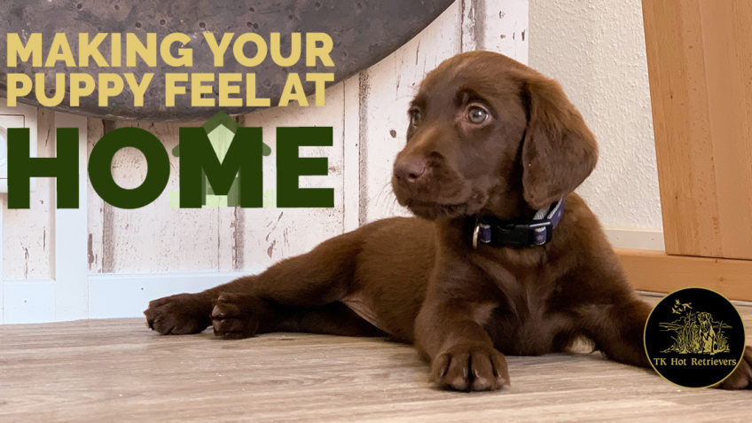 Tips for Making Your Puppy Feel Right at Home