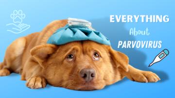Parvovirus: Symptoms, Treatment, and Prevention