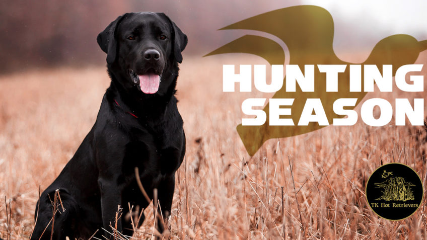 Prepping Your Dog for Hunting Season
