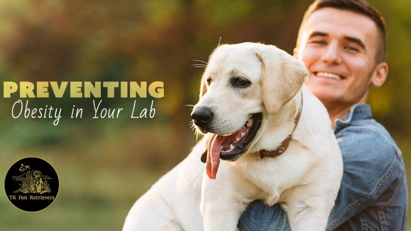 Preventing Labrador Obesity