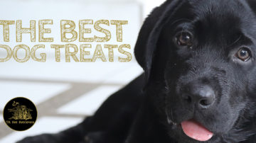The Best Dog Treats to Feed Your Lab