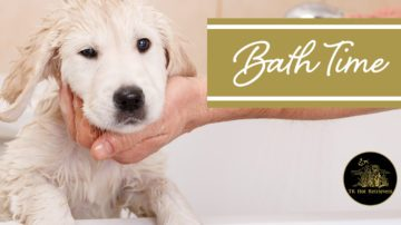 When to give your dog a bath.